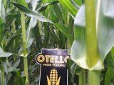 OTELLO-2. ÜRÜN